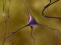 scientific_pyramidalneurons