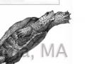 scientific_turtleexcluder