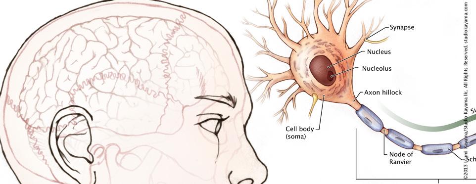 Human Brain Mapping Neuron