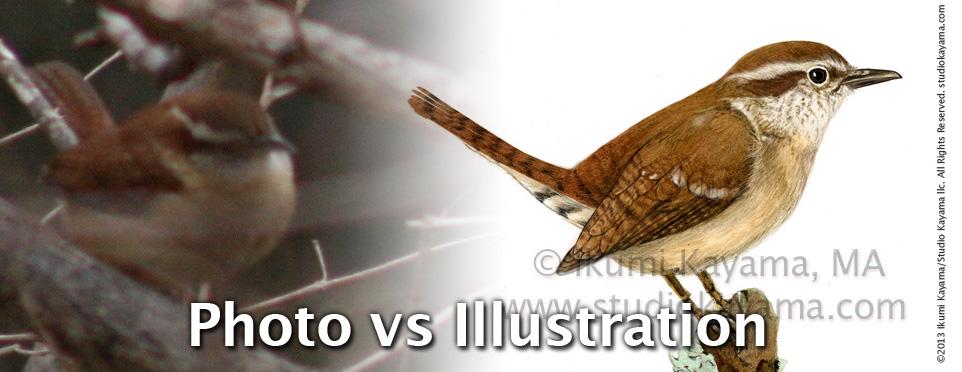 scientific illustration vs photography